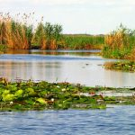Complexul lagunar Razim