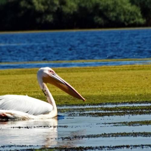 Lacul Baclanestii Mari