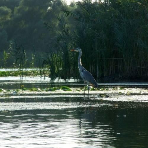 Lacul Lighenetul