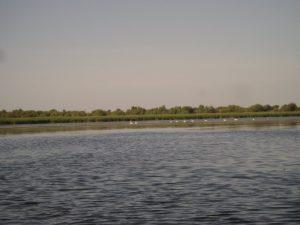 Lacul Vacaru